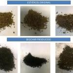 Obtienen un fertilizante más eficiente a partir de residuos ganaderos