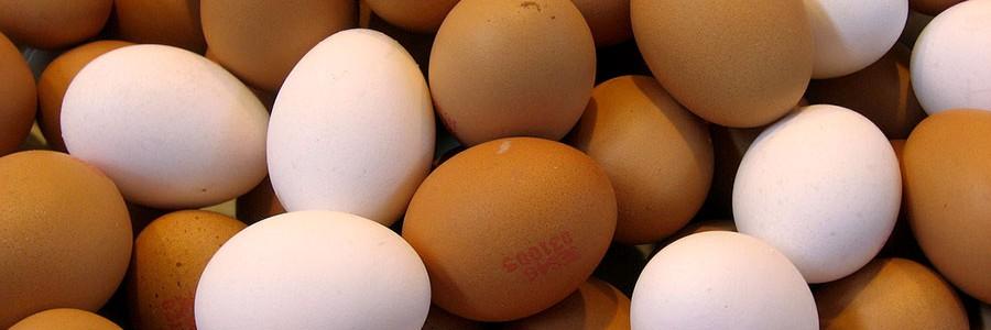 Investigan el aprovechamiento de la cáscara de huevo para obtener nuevos materiales