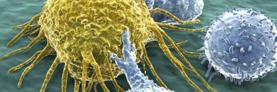 Confirmado: el plaguicida lindano es carcinógeno
