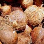 Obtienen productos saludables a partir de residuos de coco