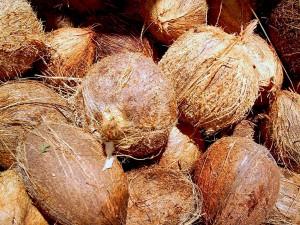 Aprovechan residuos de coco para obtener productos nutracéuticos