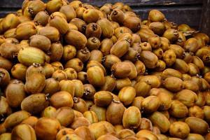 Proponen la valorización energética de los residuos de producción de kiwis
