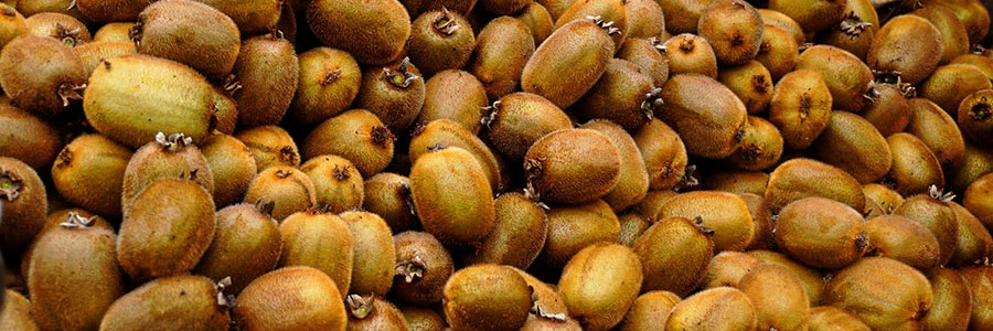 Proponen el aprovechamiento energético de los residuos de producción de kiwi