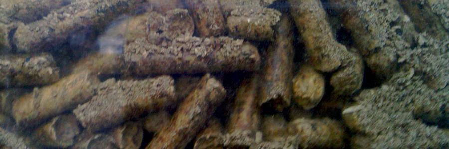 EMPRENDEbiomasa impulsará las mejores ideas de negocio en el campo de la biomasa