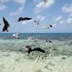 El 90% de las aves marinas ha ingerido plásticos