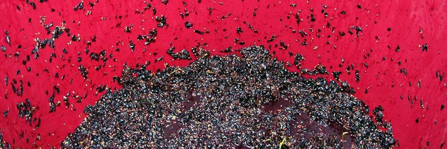 Residuos de uva para producir bioetanol