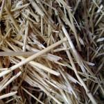Patentan un método para convertir residuos agrícolas en aceites de uso industrial