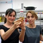Ultrasonidos para abaratar la producción de biodiésel