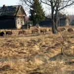 El ser humano, peor para los animales que la radiactividad de Chernóbil