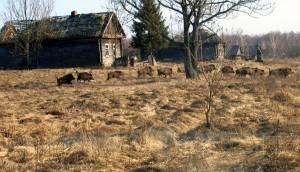 La ausencia de humanos en Chernóbil ha disparado la presencia de fauna salvaje