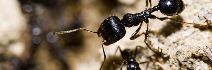Nuevos fertilizantes orgánicos a partir del exoesqueleto de crustáceos e insectos