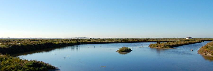 Estudian la capacidad de los ecosistemas costeros andaluces para retener CO2