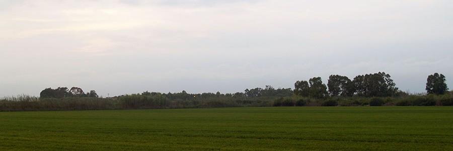 Primera planta piloto semi-industrial que genera biogás y biofertilizantes de la paja de arroz