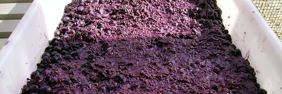 Crean alimentos saludables a partir de residuos de la producción de vino