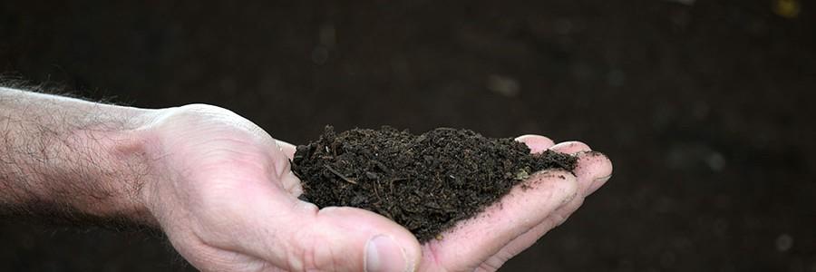 El compost mejora los suelos agrícolas y la calidad de los cultivos