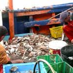 Proponen el compostaje de restos de pescado y algas para su uso en agricultura ecológica