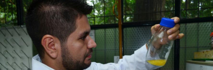 Sistema de biodegradación para eliminar la toxicidad de los plaguicidas