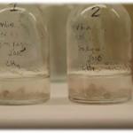Investigadores de la UVa demuestran la capacidad de un hongo para degradar metano