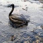 Nuevas recomendaciones para actuar frente a los delitos ambientales en la UE