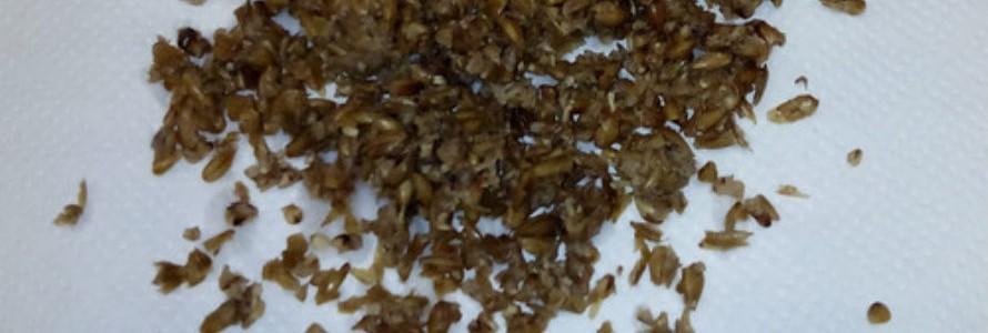 Producción de biobutanol a partir de residuos de la cerveza