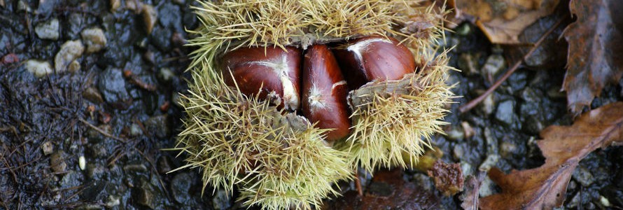 Residuos de castañas, aguardientes y zumos para obtener antioxidantes
