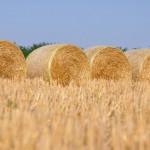Nanofibras de celulosa procedentes de paja de trigo para mantener la calidad del papel reciclado