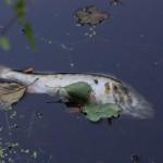 Hidrotalcitas para capturar plomo y cadmio en aguas contaminadas