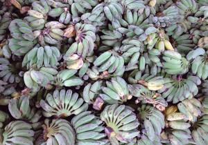 Analizan el potencial de los residuos de plátano para producir bioetanol
