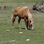 Galicia autoriza el enterramiento de animales muertos en determinadas circunstancias