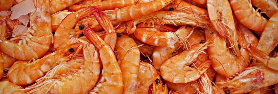 Obtienen lubricantes biodegradables a partir de residuos de crustáceos