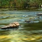 Los residuos de fármacos perjudican gravemente la vida en los ríos