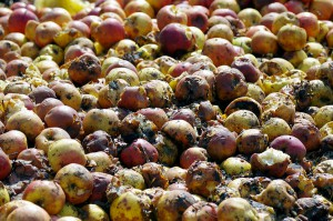 El proyecto REFRESH quiere analizar las causas del desperdicio alimentario en toda la cadena de valor agroalimentaria