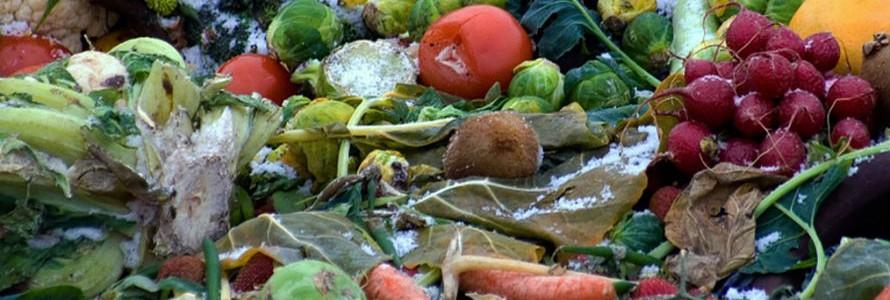 Transforman residuos orgánicos en hidrógeno