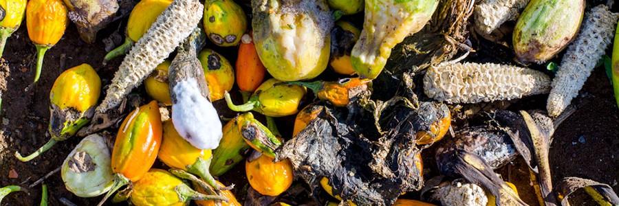 GISWASTE: Cómo optimizar la gestión de residuos agroalimentarios con metodologías de decisión multicriterio y sistemas de información geográfica