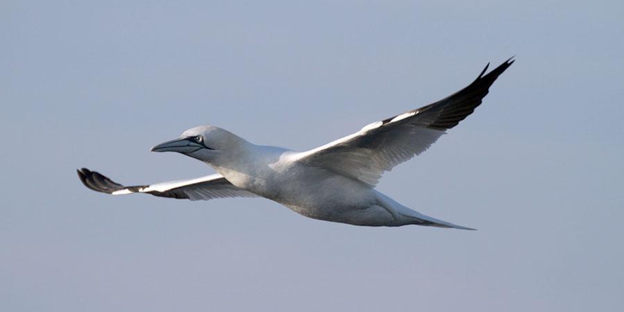 La investigación pretende conocer en profundidad cómo afectan los microplásticos a las aves y peces del Golfo de Bizkaia