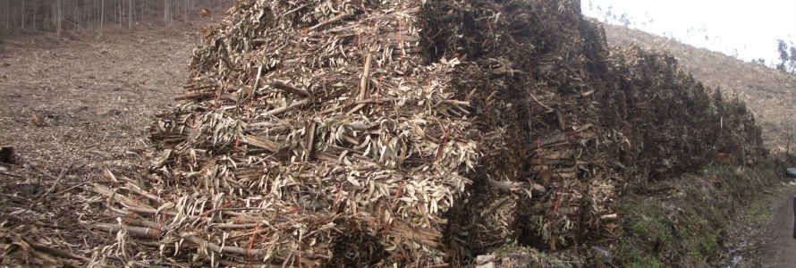 La UVa concluye que la biomasa agroforestal es más barata que los combustibles fósiles