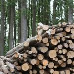 APPA pide subastas específicas para biomasa, biogás y residuos