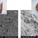 Utilizan materiales de bajo coste para depurar aguas residuales