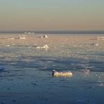 """Revelan la existencia de una gran """"cinta transportadora"""" de residuos plásticos hasta el Ártico"""
