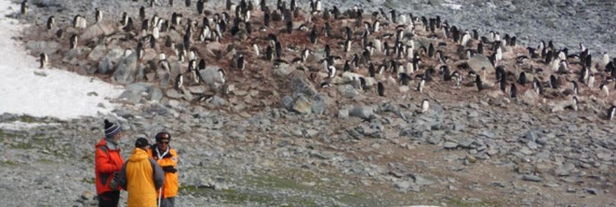 Los contaminantes emergentes también afectan a la Antártida