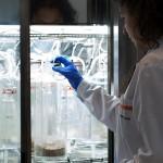 Aimplas obtiene la primera acreditación nacional para ensayos de biodegradación en compost y en suelo y de desintegración de plásticos