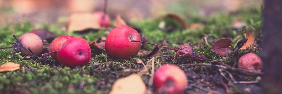 Normas, alimentos y derroche