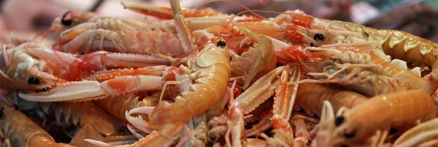 La Universidad de Cantabria analiza el aprovechamiento de los residuos marinos