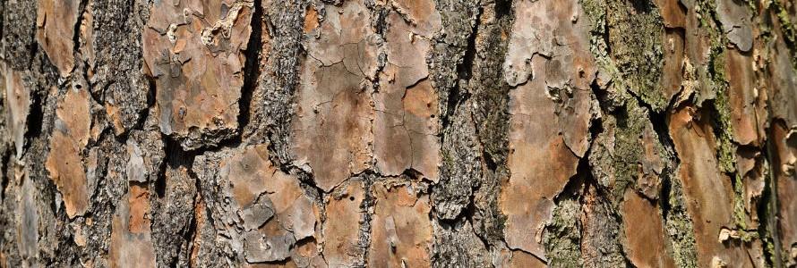 Método sostenible para proteger la madera a partir de residuos forestales