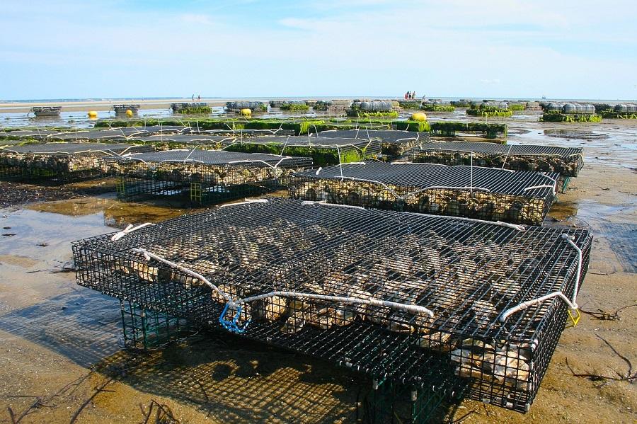 Azti lanza una guía de prevención de residuos en acuicultura
