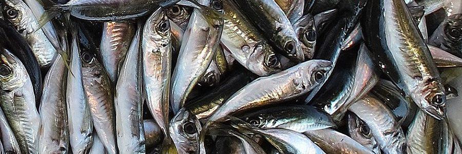 Una investigación de la USC propone la producción de bioplásticos a partir de aguas residuales del sector de conservas de pescado