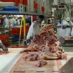 El Proyecto Water2REturn busca reducir los contaminantes residuos generados en los mataderos