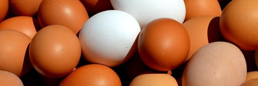 La iniciativa 'Tu basura vale un huevo' desvía del vertedero más de siete toneladas de residuos orgánicos en Sevilla