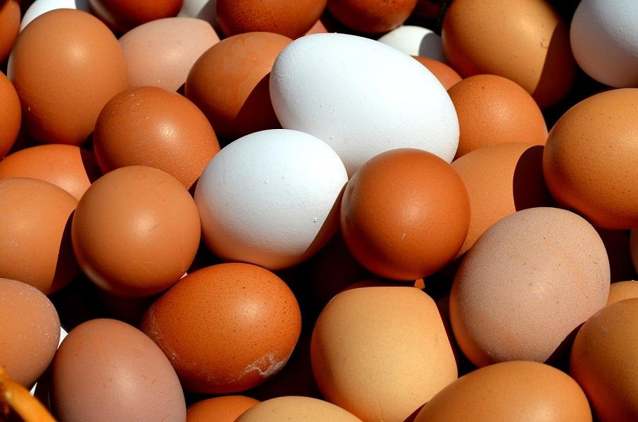 'Tu basura vale un huevo', iniciativa para aprovechar los biorresiduos en la alimentación animal