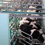 Un nuevo software permite reducir un 20% los residuos de la industria láctea